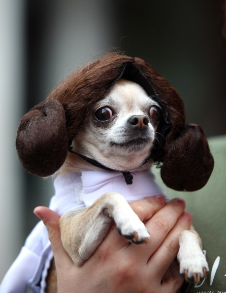 Help me, Dobie-Wan. You're my only hope.