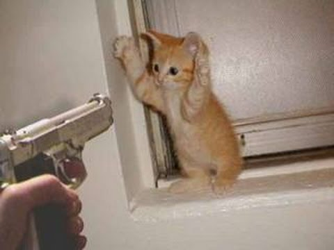 ISIS hunting down their latest foe: Kittens. (Pinterest)