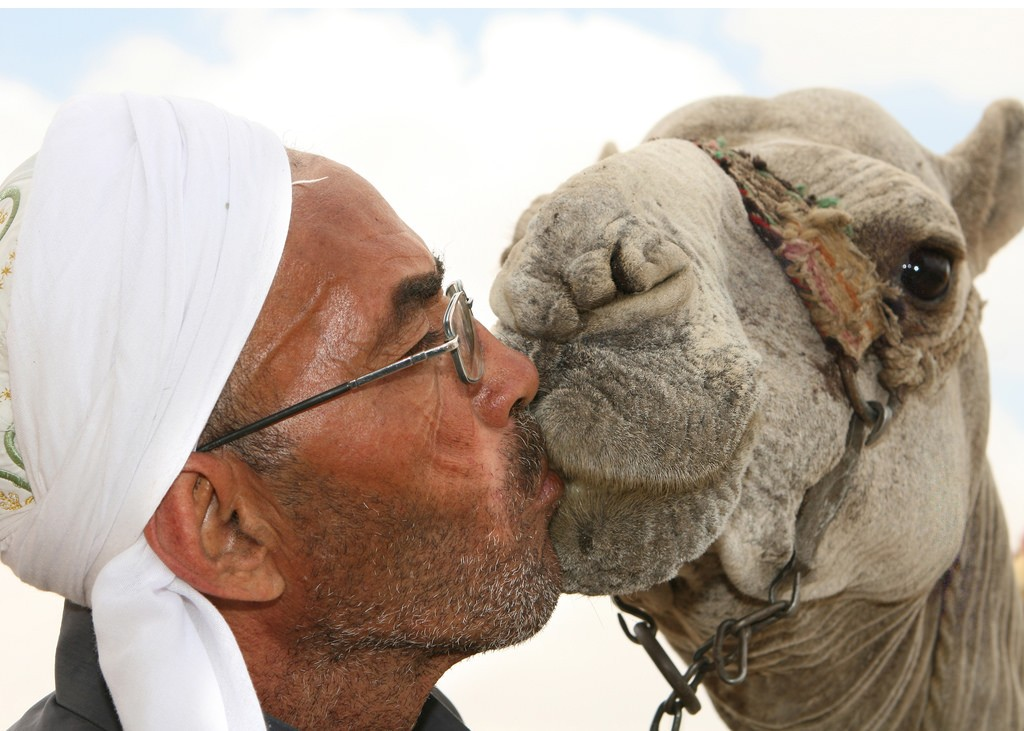 Camel pageant - a kiss for the winner. (Flicker)